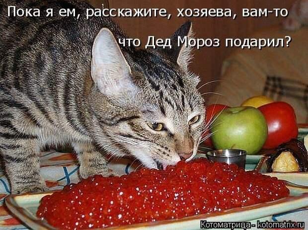 1451737493_kotomatricy-5
