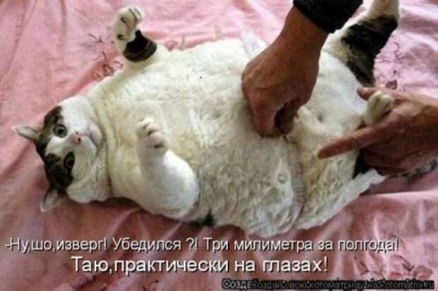 1300413820_kotomatritsa-5