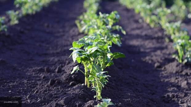 Эксперты рассказали, что можно посадить в огороде в апреле