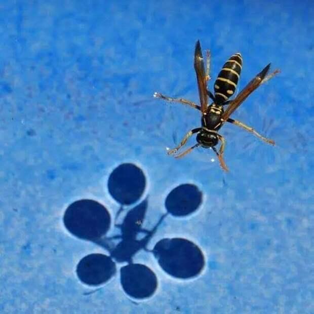Физика — удивительная штука иллюзии, опыты, поверхностностное натяжение воды, физика, эксперименты, эффект Коанда