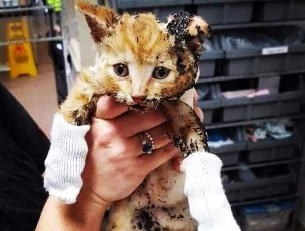 Парень забрал к себе котенка, который пострадал в пожаре. Теперь кроху не узнать