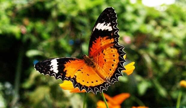 Мое мнение о насекомых-вредителях в саду
