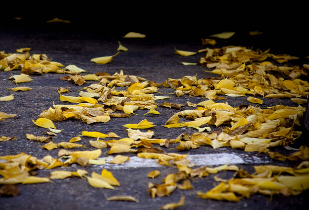 Осень. (Nimish Gogri)