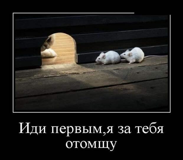 ocNu0qPQMa4