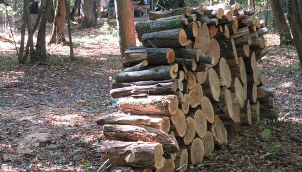 В Подмосковье в два раза снизились объемы заготовки древесины на дрова за 2019 год
