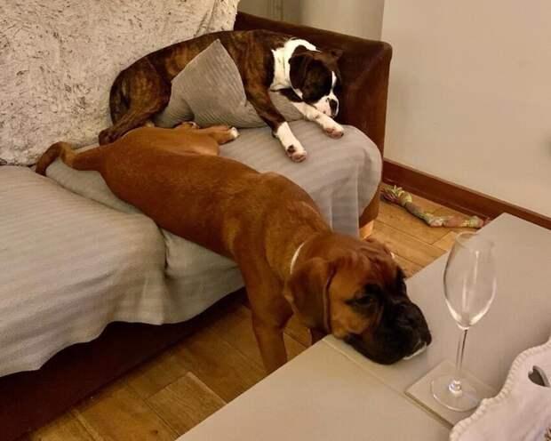 Чья-нибудь собака так спит?