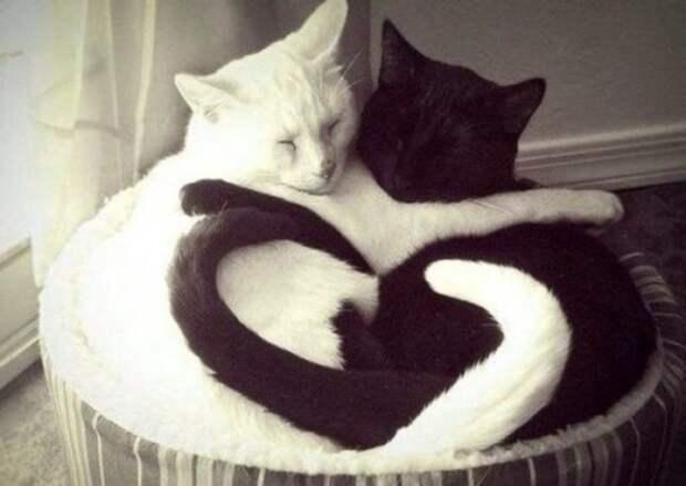 Как кошачья любовь помирила хозяев