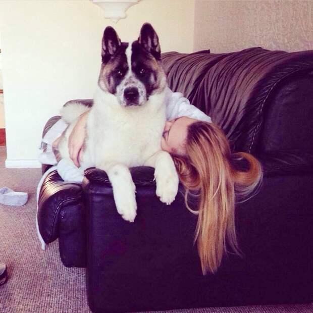 Собака на диване с хозяйкой