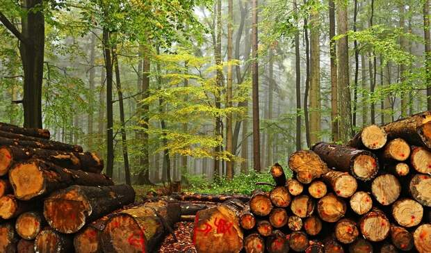 ВРоссии изменились правила экспорта древесины