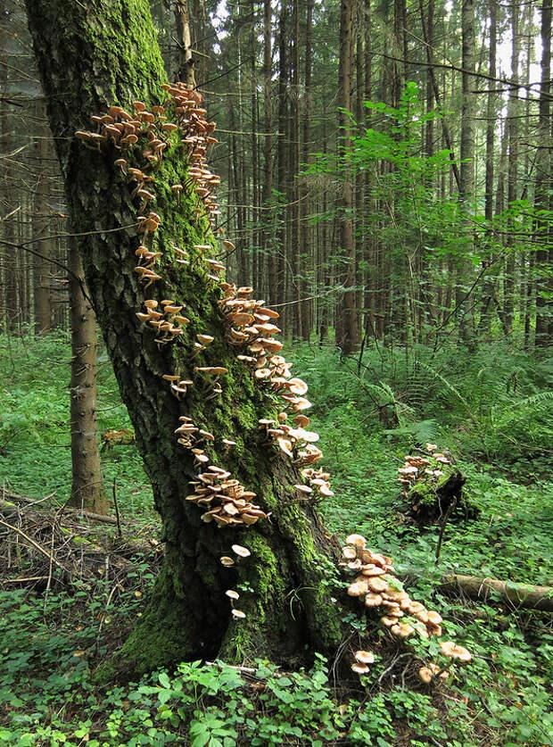 Осенние туманы, в лес за опятами