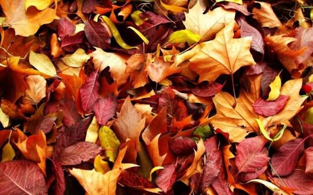Обои Осенняя листва для рабочего стола. Скачать бесплатно ка…