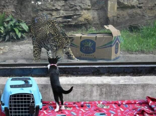 Бездомных животных привели в зоопарк, чтобы познакомить их с местными животными