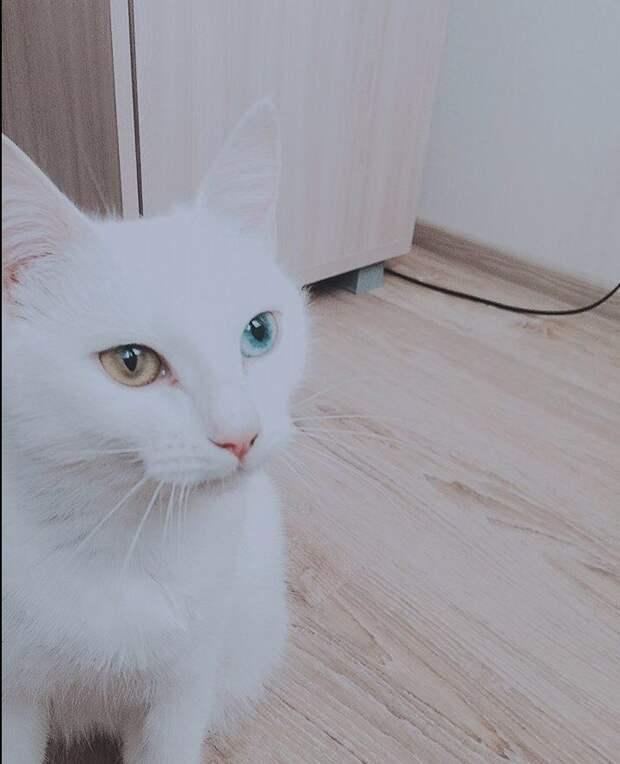 «Беременная глухая кошка с Авито? Рискнём!» Никому не нужная мать оказалась чудом)
