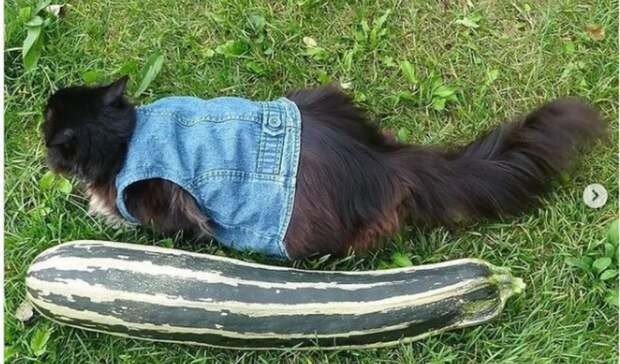 Измеряем котами: жительница Приморья похвалилась толстыми красавцами