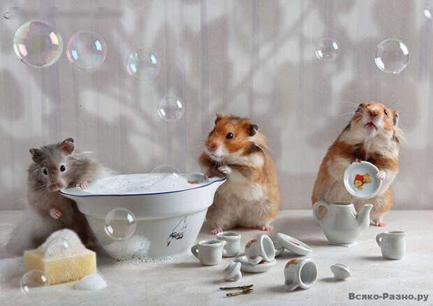 Забавные хомячки Елены Ереминой (9 фото)