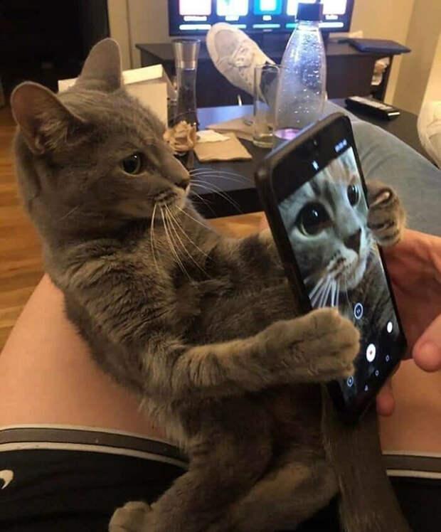 Этот кот действительно хорошо фотографирует.