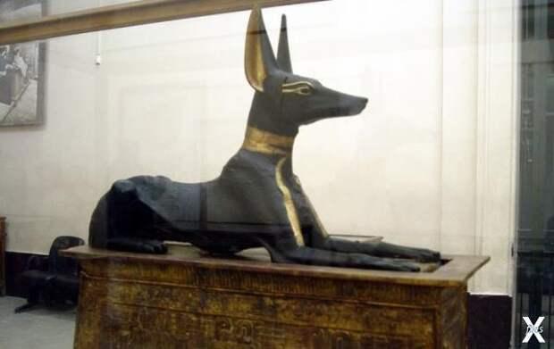 В Древнем Египте люди поклонялись бог...