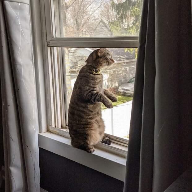 Мне кажется, что наша кошка - это вовсе не кошка