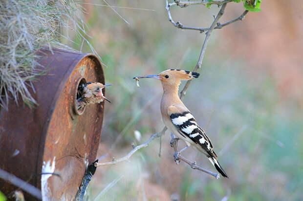 20.  красота, природа, птицы, фото