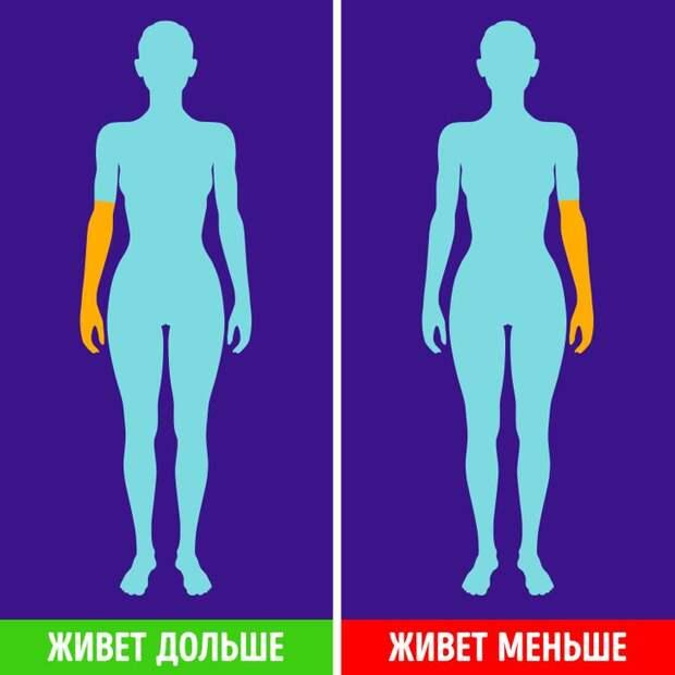 8 фактов о вашем теле, свидетельствующих о том, что вы потенциальный долгожитель