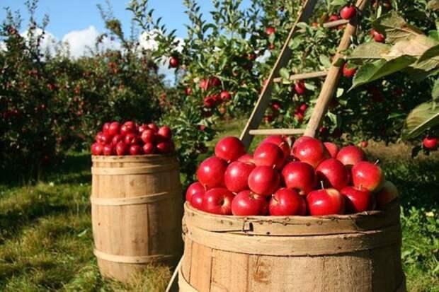 Российские плоды и ягоды выросли на рекорд