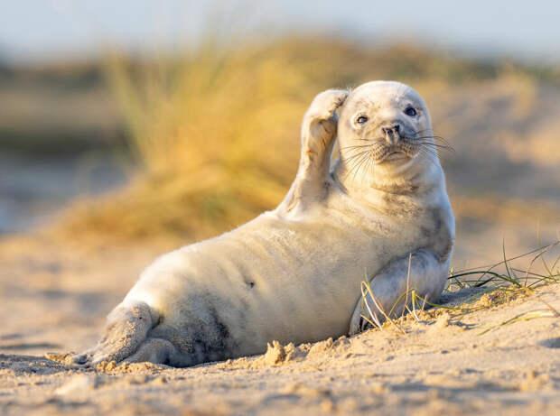 Джохам Сиггессон / Comedy Wildlife Photo Awards 2020