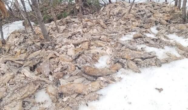 Прокуратура проверит свалку мертвой рыбы вКарелии