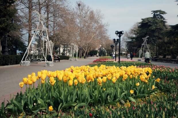 В Севастополе высадили более 300 тысяч цветов по городу