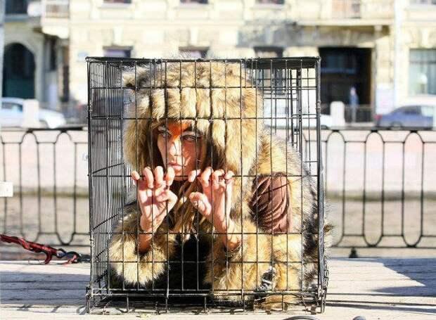 В Петербурге пройдёт марш Животные – не одежда