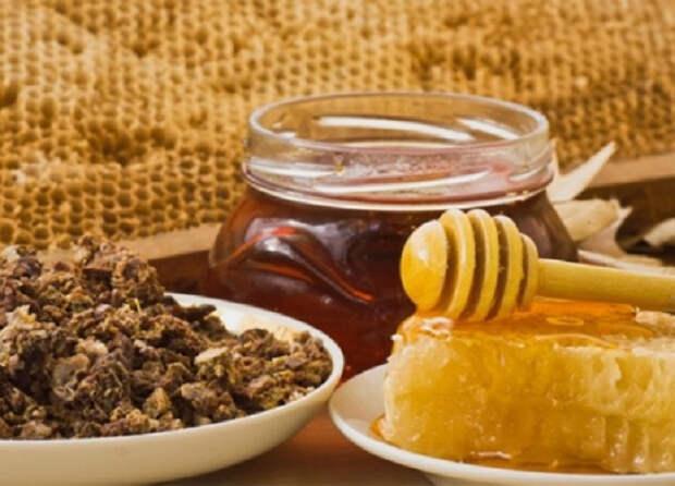 Смесь меда и прополиса: поможет при простуде, насытит витаминами, облегчит боль в горле