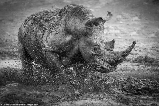 Ошеломляющие фото конкурса World Nature Photography Awards. Среди победителей конкурса милый перевернутый орангутанг