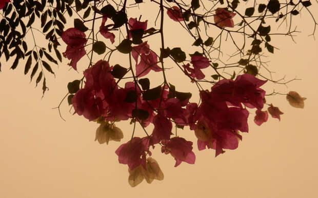 cvety-cvetok-listya-kipr