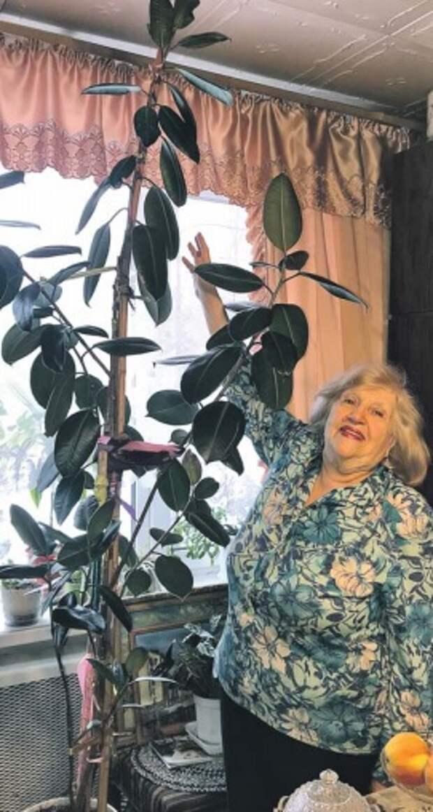 Пенсионерка из Бутырского из полузасохшего листка вырастила огромный фикус