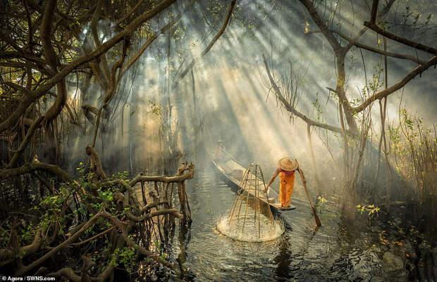 Красота водного мира на снимках