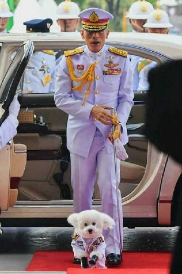 Маршал авиации пудель Фу-Фу с самим Махой. Фото: The Bureau of the Royal Household/Wikimedia Commons