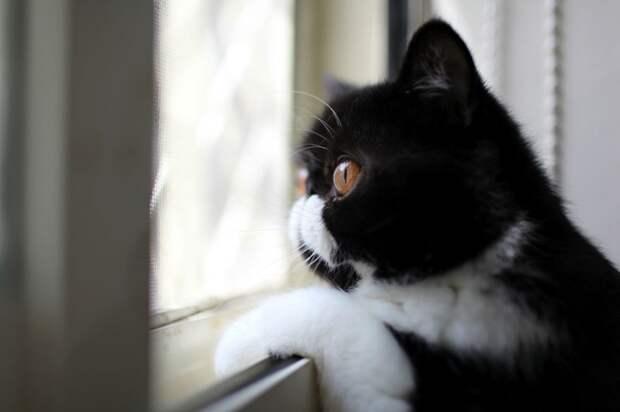 7238860-R3L8T8D-650-cat-waiting-window-61