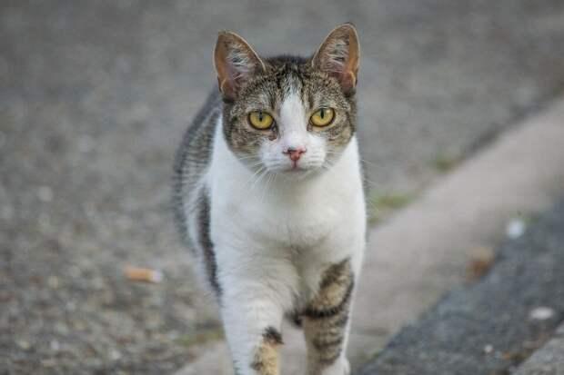 Кот пытался перейти дорогу, но застыл на проезжей части. Только чудом он оказался не под колёсами, а на руках своего спасителя