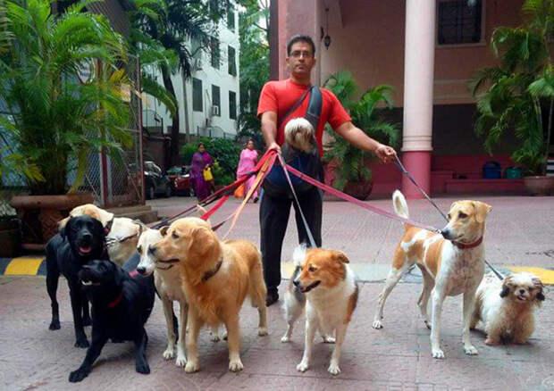 Ракеш и девять собак на выгуле. Фото: Rakesh Shukla.
