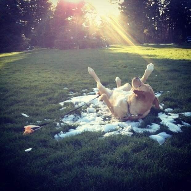 Смешные и забавные собаки - 2