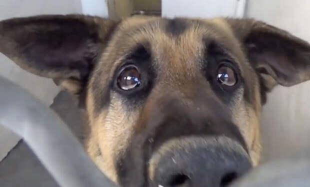Старый пес потерял надежду в клетке: счастливый случай подарил ему вторую жизнь