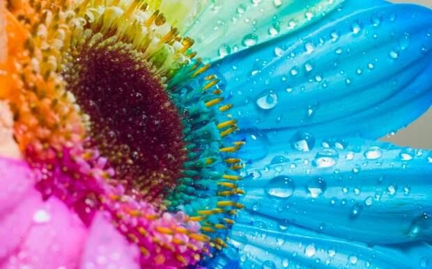 DataLife Engine Версия для печати Разноцветные цветы