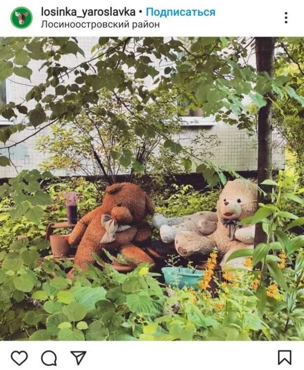 Фото дня: за палисадником в Лосинке следят медведи