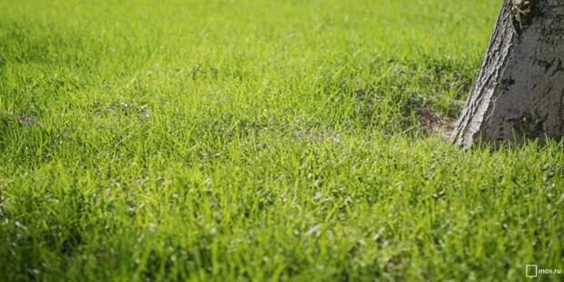 «Жилищник» засеял газон по улице Расковой