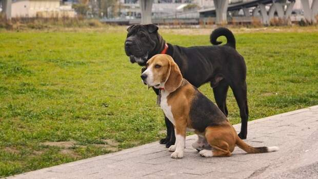 Названы породы собак с самым крепким здоровьем