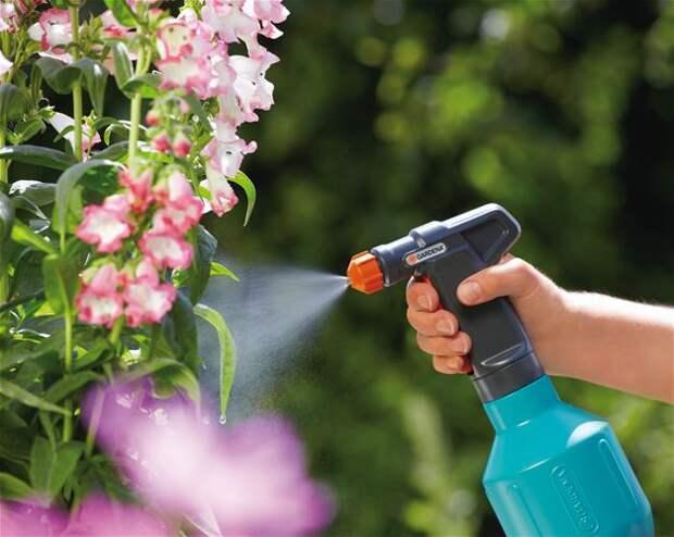 Растения-инсектициды: готовим яды для вредителей