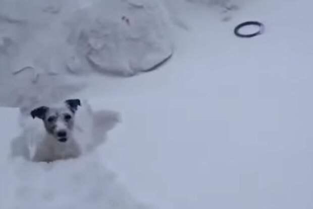 Хозяин, я смогу! Фото: стоп-кадр Norilsk News, Youtube.