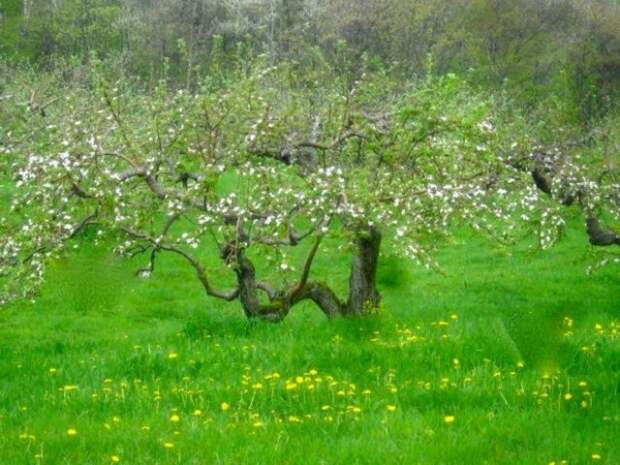 плодовый сад на севере