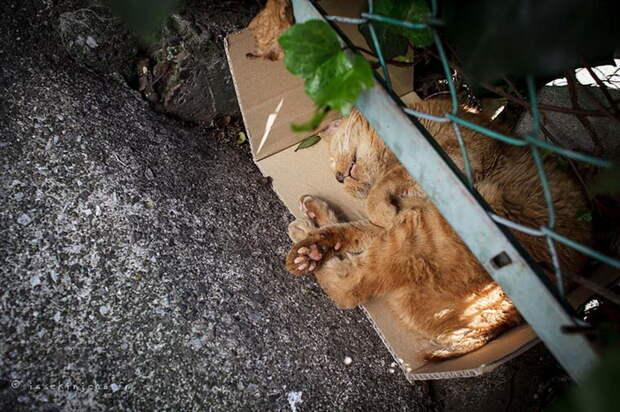 Жизнь японских уличных кошек