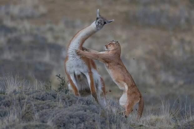 15 самых впечатляющих снимков с конкурса «Лучший фотограф дикой природы 2019»