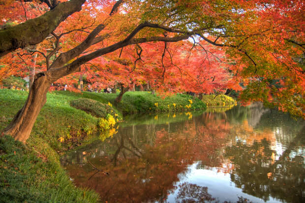 Осень. (Haris Bahrudin)